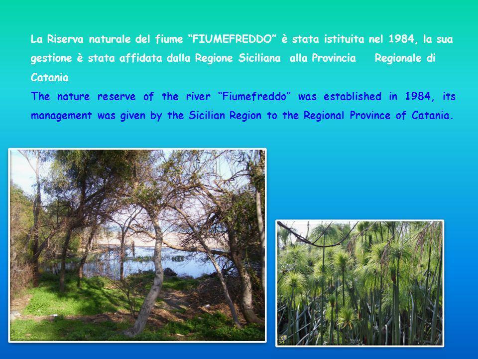 La Riserva naturale del fiume FIUMEFREDDO è stata istituita nel 1984, la sua gestione è stata affidata dalla Regione Siciliana alla Provincia Regional
