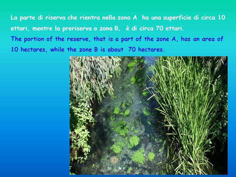 La parte di riserva che rientra nella zona A ha una superficie di circa 10 ettari, mentre la preriserva o zona B, è di circa 70 ettari. The portion of
