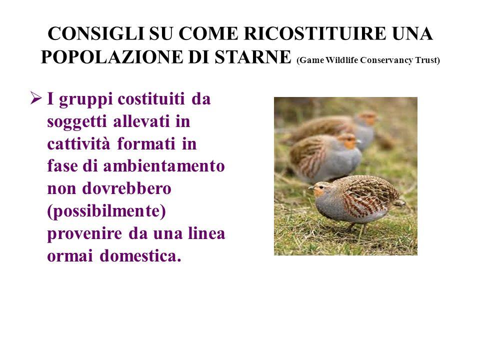 CONSIGLI SU COME RICOSTITUIRE UNA POPOLAZIONE DI STARNE (Game Wildlife Conservancy Trust) I gruppi costituiti da soggetti allevati in cattività format