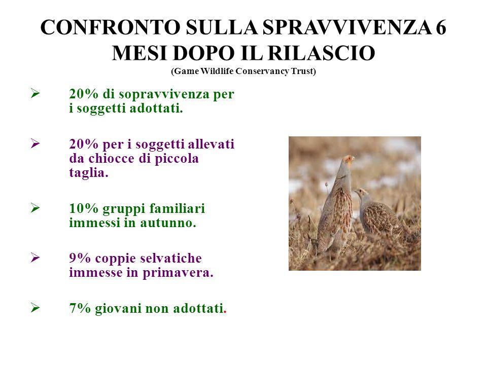 CONFRONTO SULLA SPRAVVIVENZA 6 MESI DOPO IL RILASCIO (Game Wildlife Conservancy Trust) 20% di sopravvivenza per i soggetti adottati. 20% per i soggett