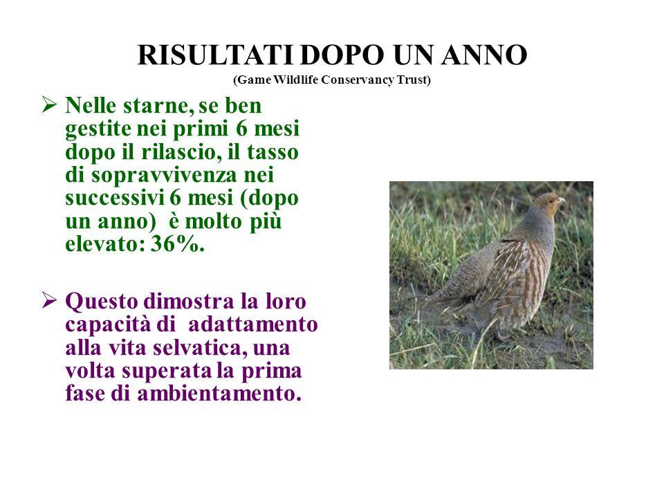 RISULTATI DOPO UN ANNO (Game Wildlife Conservancy Trust) Nelle starne, se ben gestite nei primi 6 mesi dopo il rilascio, il tasso di sopravvivenza nei