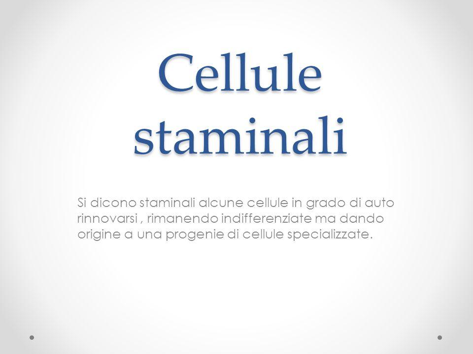 Cellule staminali Si dicono staminali alcune cellule in grado di auto rinnovarsi, rimanendo indifferenziate ma dando origine a una progenie di cellule