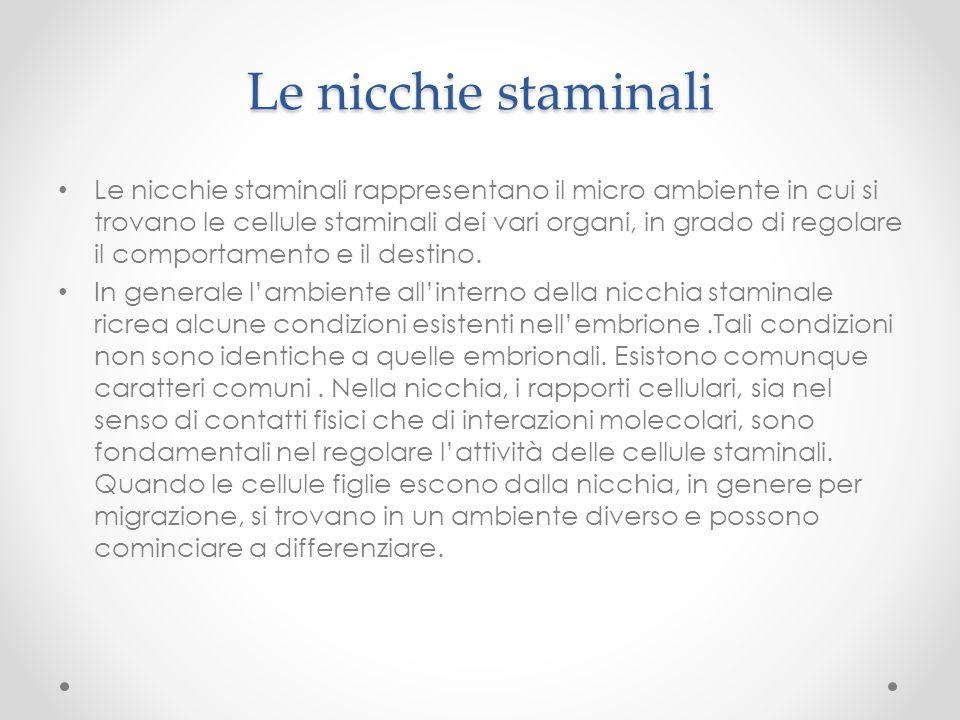 Le nicchie staminali Le nicchie staminali rappresentano il micro ambiente in cui si trovano le cellule staminali dei vari organi, in grado di regolare