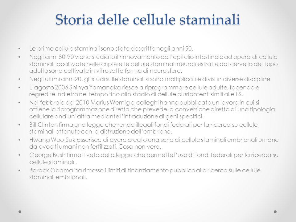 Storia delle cellule staminali Le prime cellule staminali sono state descritte negli anni 50. Negli anni 80-90 viene studiato il rinnovamento dellepit