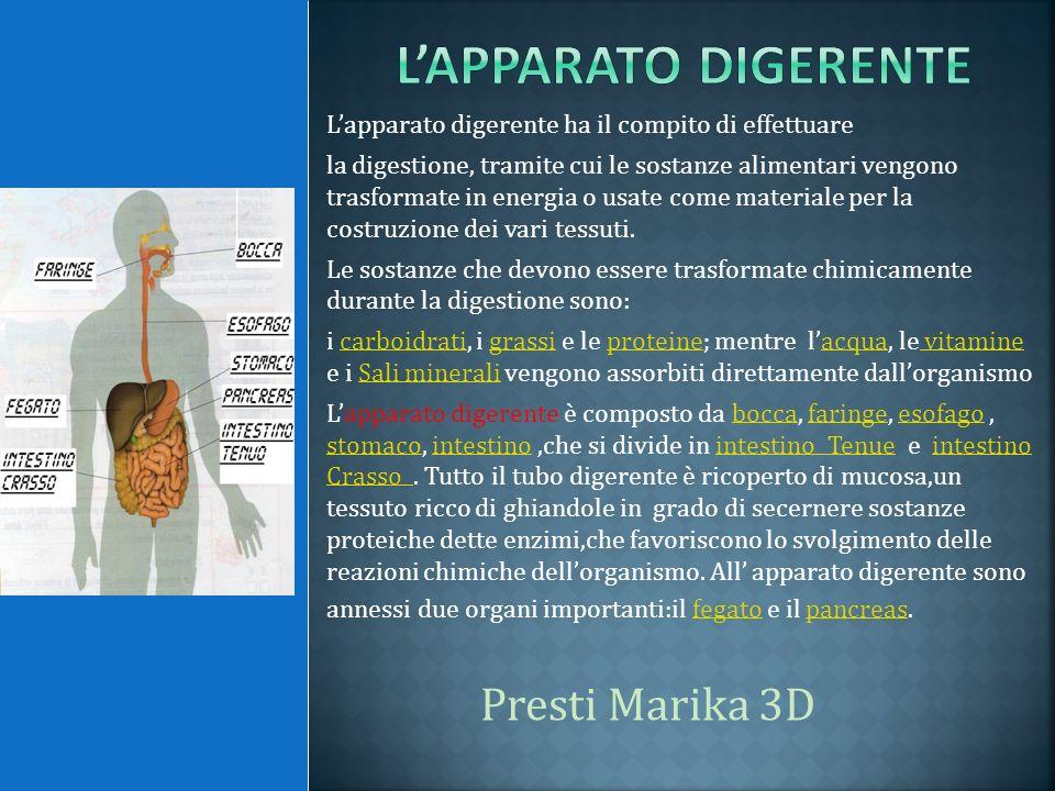 Lapparato digerente ha il compito di effettuare la digestione, tramite cui le sostanze alimentari vengono trasformate in energia o usate come material
