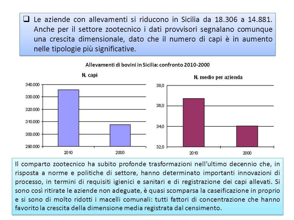 Le aziende con allevamenti si riducono in Sicilia da 18.306 a 14.881. Anche per il settore zootecnico i dati provvisori segnalano comunque una crescit