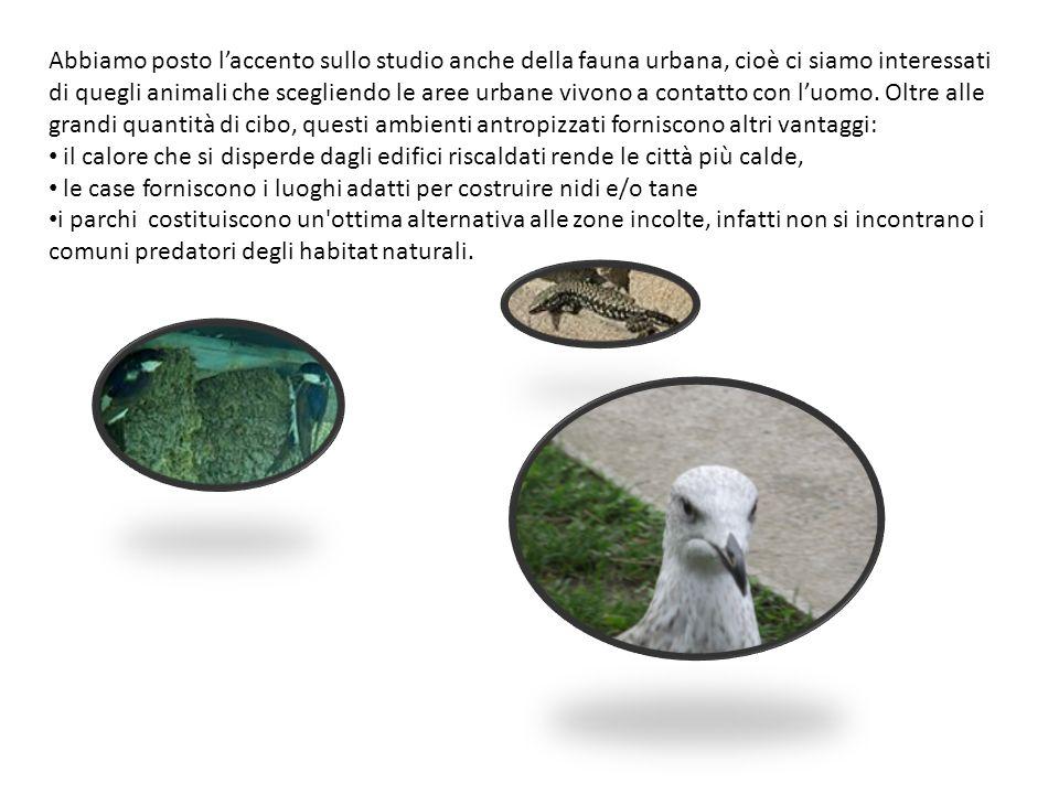 Abbiamo posto laccento sullo studio anche della fauna urbana, cioè ci siamo interessati di quegli animali che scegliendo le aree urbane vivono a conta
