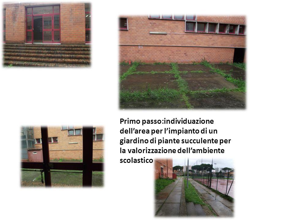Primo passo:individuazione dellarea per limpianto di un giardino di piante succulente per la valorizzazione dellambiente scolastico