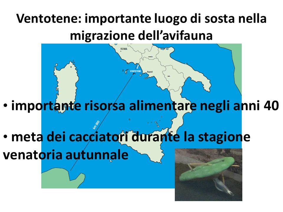 Ventotene: importante luogo di sosta nella migrazione dellavifauna importante risorsa alimentare negli anni 40 meta dei cacciatori durante la stagione