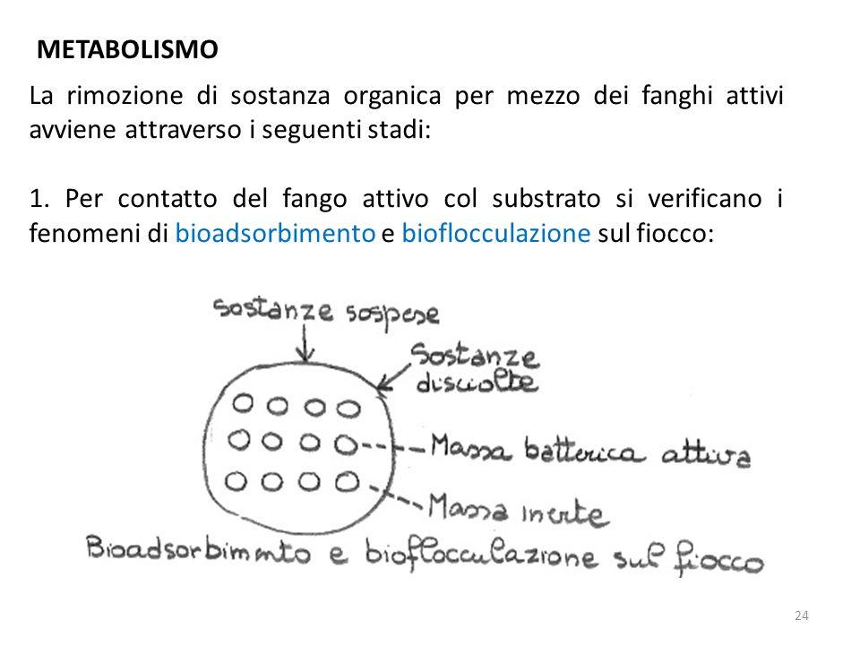 La rimozione di sostanza organica per mezzo dei fanghi attivi avviene attraverso i seguenti stadi: 1. Per contatto del fango attivo col substrato si v