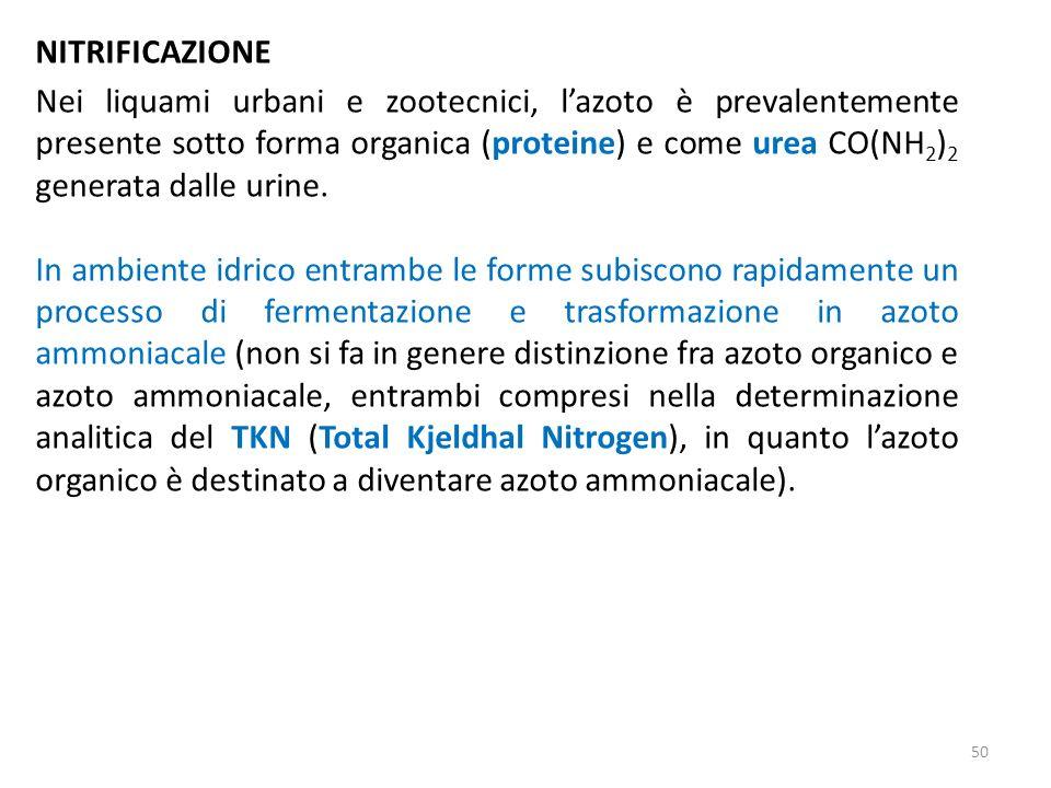 NITRIFICAZIONE Nei liquami urbani e zootecnici, lazoto è prevalentemente presente sotto forma organica (proteine) e come urea CO(NH 2 ) 2 generata dal