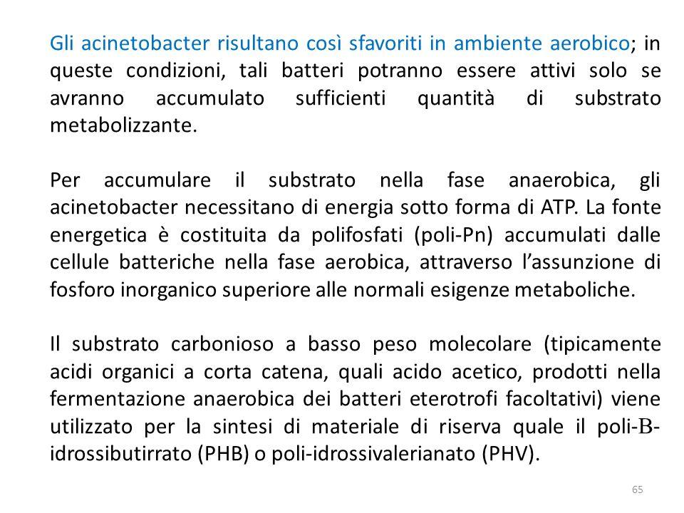 Gli acinetobacter risultano così sfavoriti in ambiente aerobico; in queste condizioni, tali batteri potranno essere attivi solo se avranno accumulato