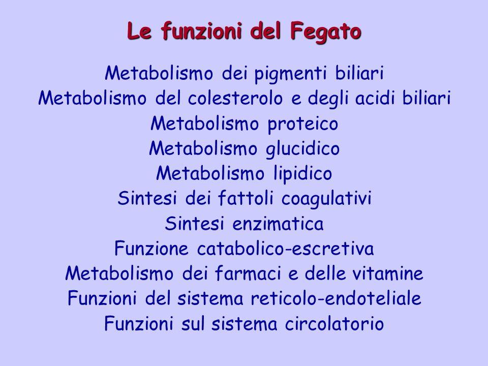 Le funzioni del Fegato Metabolismo dei pigmenti biliari Metabolismo del colesterolo e degli acidi biliari Metabolismo proteico Metabolismo glucidico M