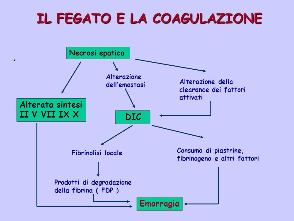IL FEGATO E LA COAGULAZIONE. Necrosi epatica Alterata sintesi II V VII IX X Alterazione dellemostasi DIC Fibrinolisi locale Prodotti di degradazione d