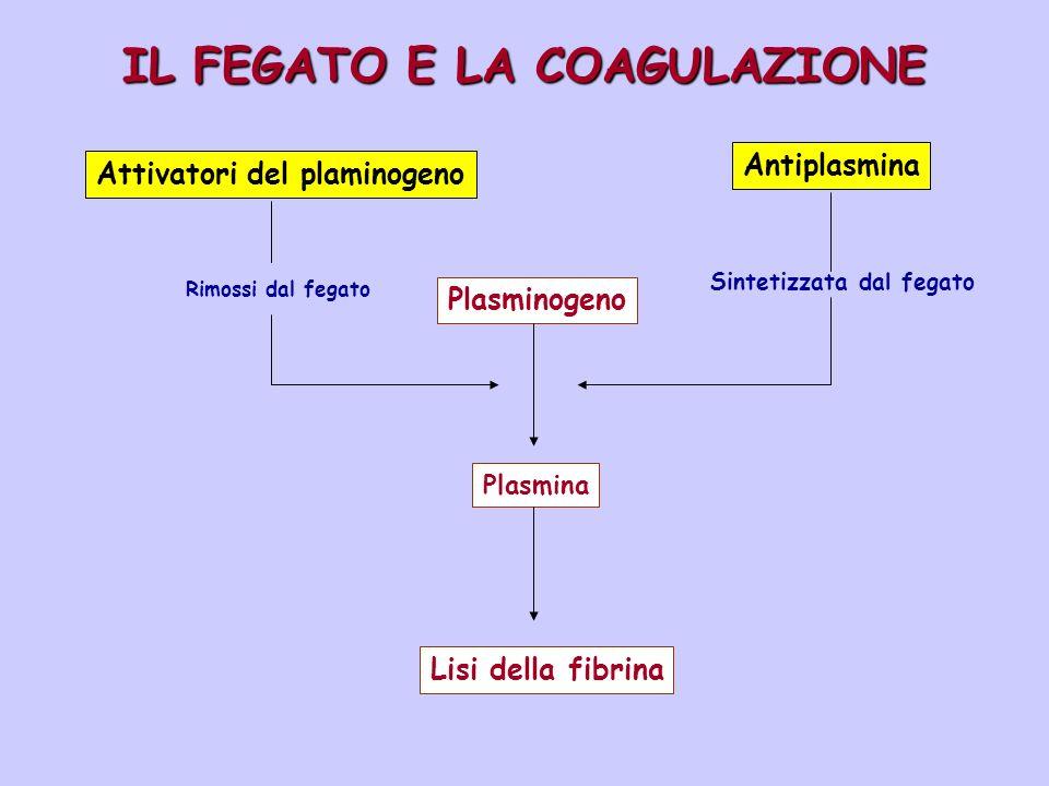 IL FEGATO E LA COAGULAZIONE. Attivatori del plaminogeno Rimossi dal fegato Antiplasmina Sintetizzata dal fegato Plasminogeno Plasmina Lisi della fibri