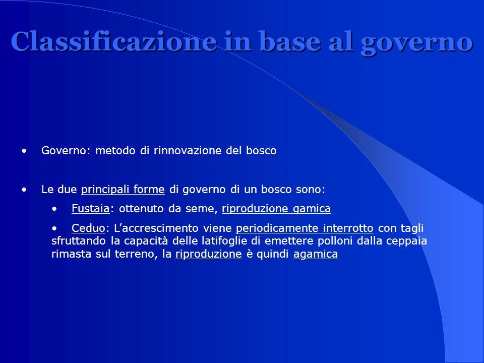 Classificazione in base al governo Governo: metodo di rinnovazione del bosco Le due principali forme di governo di un bosco sono: Fustaia: ottenuto da