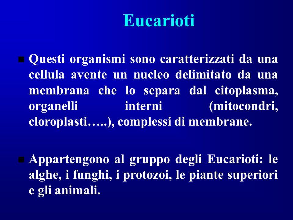 Eucarioti Questi organismi sono caratterizzati da una cellula avente un nucleo delimitato da una membrana che lo separa dal citoplasma, organelli inte