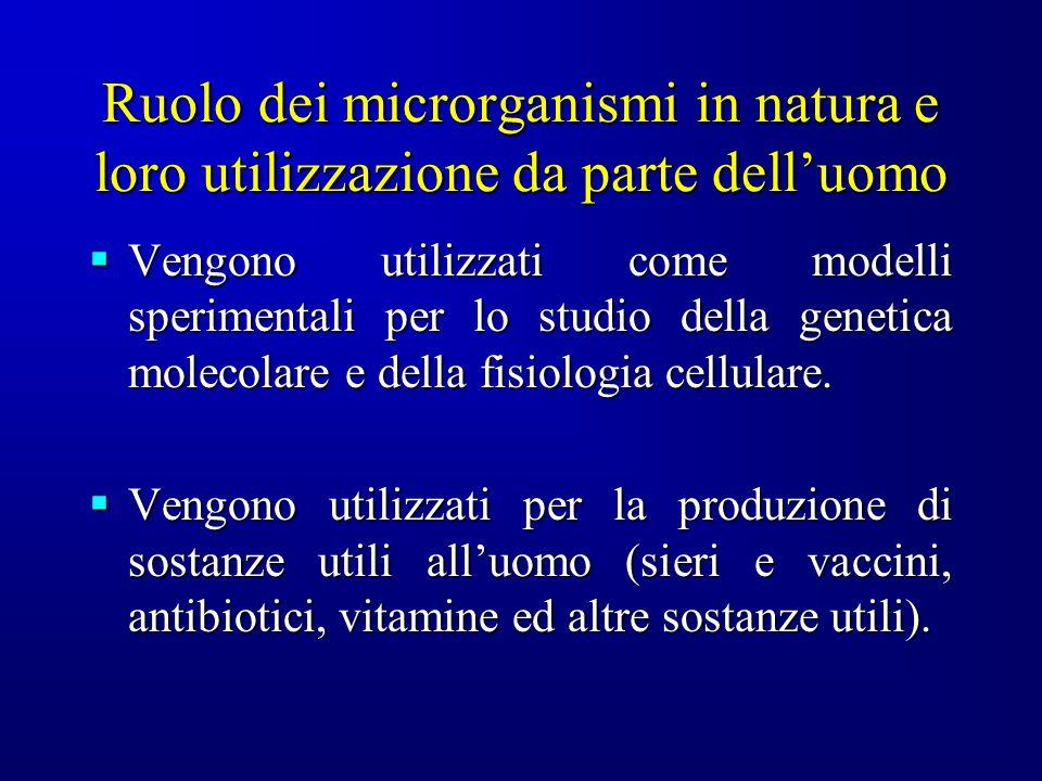Ruolo dei microrganismi in natura e loro utilizzazione da parte delluomo Vengono utilizzati come modelli sperimentali per lo studio della genetica mol