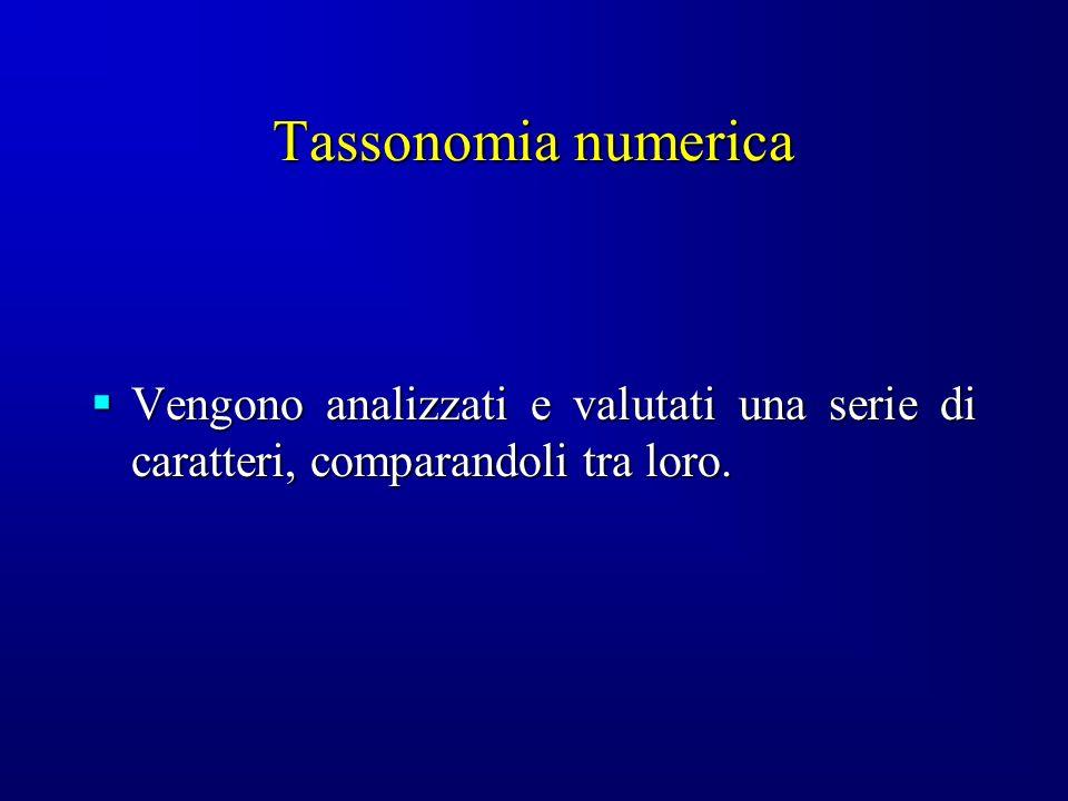 Tassonomia numerica Vengono analizzati e valutati una serie di caratteri, comparandoli tra loro. Vengono analizzati e valutati una serie di caratteri,