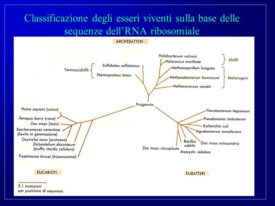 Classificazione degli esseri viventi sulla base delle sequenze dellRNA ribosomiale