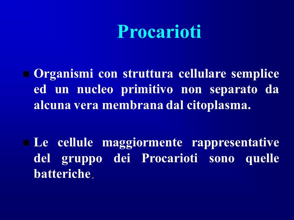Procarioti Organismi con struttura cellulare semplice ed un nucleo primitivo non separato da alcuna vera membrana dal citoplasma.. Le cellule maggiorm