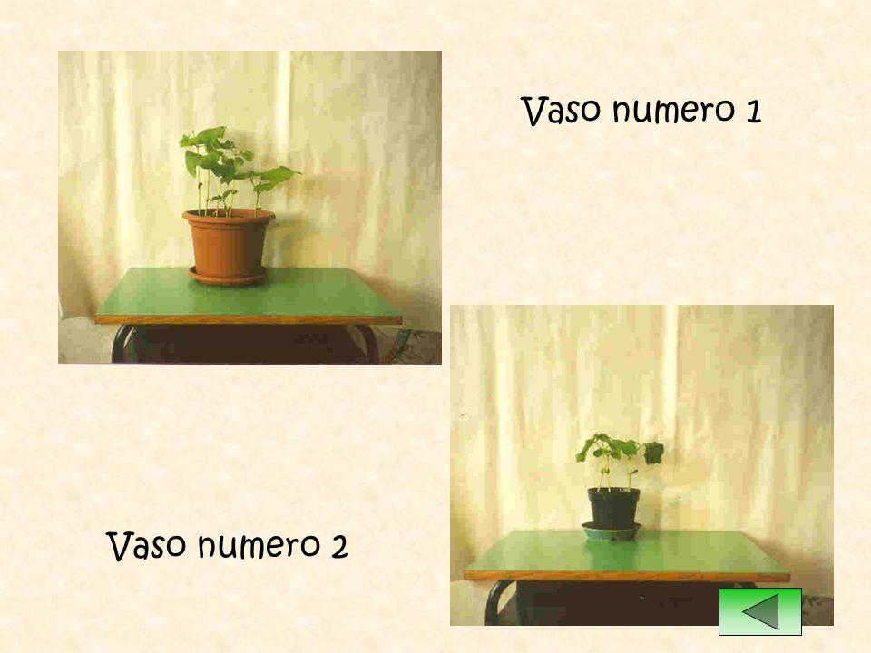 Vaso numero 1 Vaso numero 2