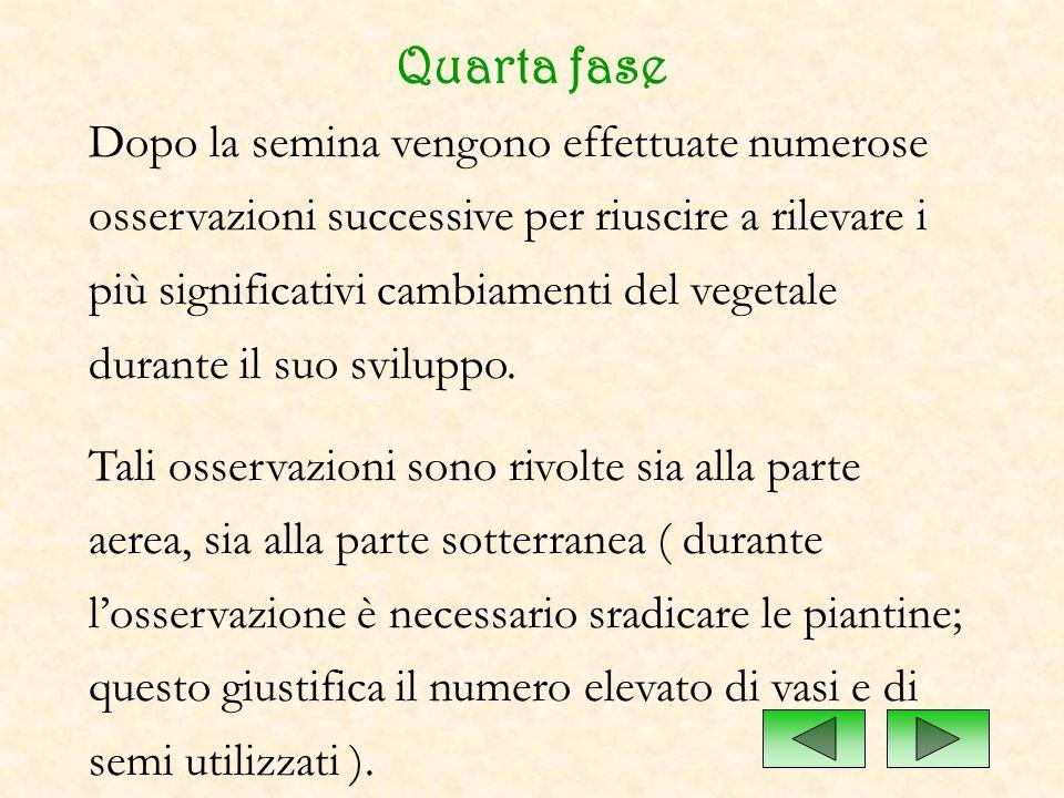 Quarta fase Dopo la semina vengono effettuate numerose osservazioni successive per riuscire a rilevare i più significativi cambiamenti del vegetale du