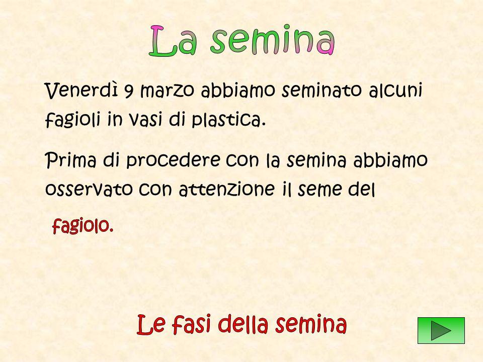Seconda fase Semina dei fagioli in vasi di plastica e di terracotta.