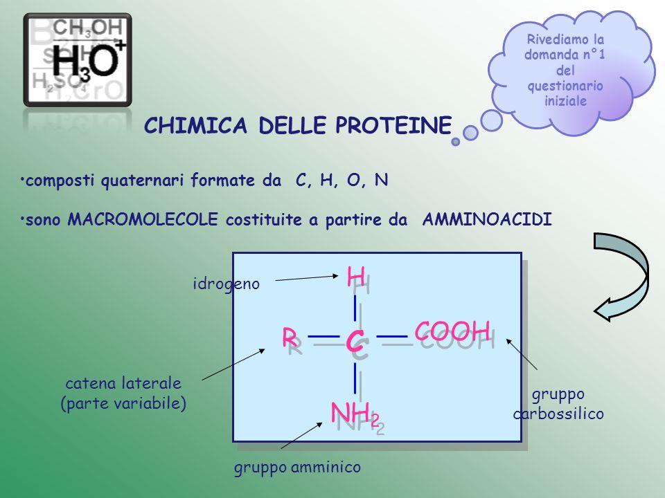 composti quaternari formate da C, H, O, N sono MACROMOLECOLE costituite a partire da AMMINOACIDI CHIMICA DELLE PROTEINE C C H H R R COOH NH 2 gruppo c