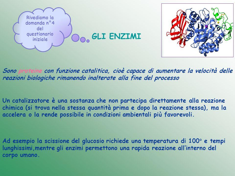 GLI ENZIMI Sono proteine con funzione catalitica, cioè capace di aumentare la velocità delle reazioni biologiche rimanendo inalterate alla fine del pr