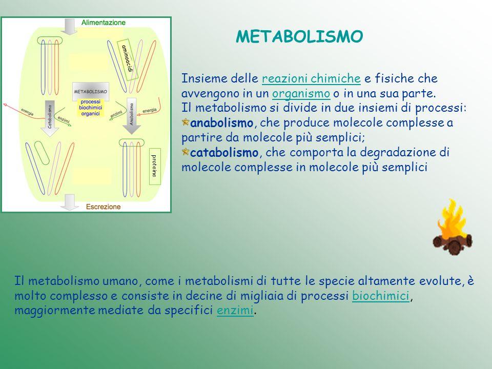 METABOLISMO Insieme delle reazioni chimiche e fisiche che avvengono in un organismo o in una sua parte.reazioni chimicheorganismo Il metabolismo si di
