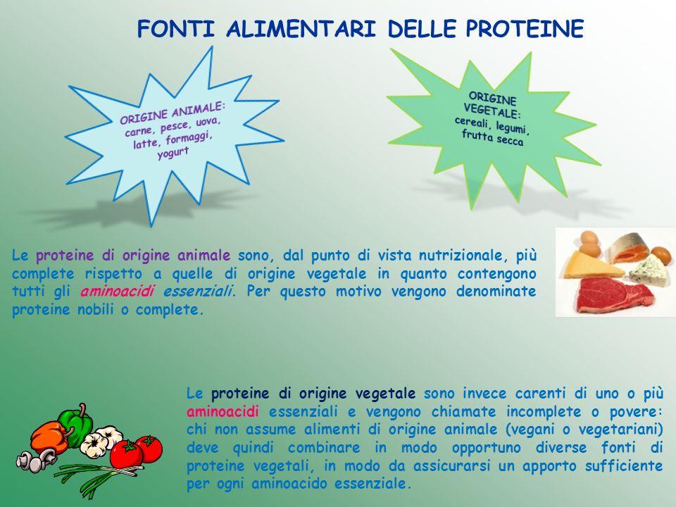 FUNZIONI DELLE PROTEINE Le principali funzioni delle proteine sono: Funzione plastico-strutturale; Funzione regolatrice; Funzione di difesa immunitaria; Funzione energetica.