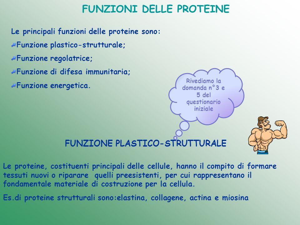 FUNZIONE Proteine di trasporto:che veicolano ad es ossigeno(emoglobina) o lipidi (lipoproteine) Proteine strutturali :rappresentano componenti fondamentali della struttura di organi o tessuti (collagene) Proteine con funzione di ormoni: controllano i processi metabolici (insulina e glucagone) Enzimi Proteine contrattili: consentono la contrazione muscolare (actina e miosina) Proteine per la difesa immunitaria: gli anticorpi che rappresentano un sistema di difesa specifico per il nostro organismo