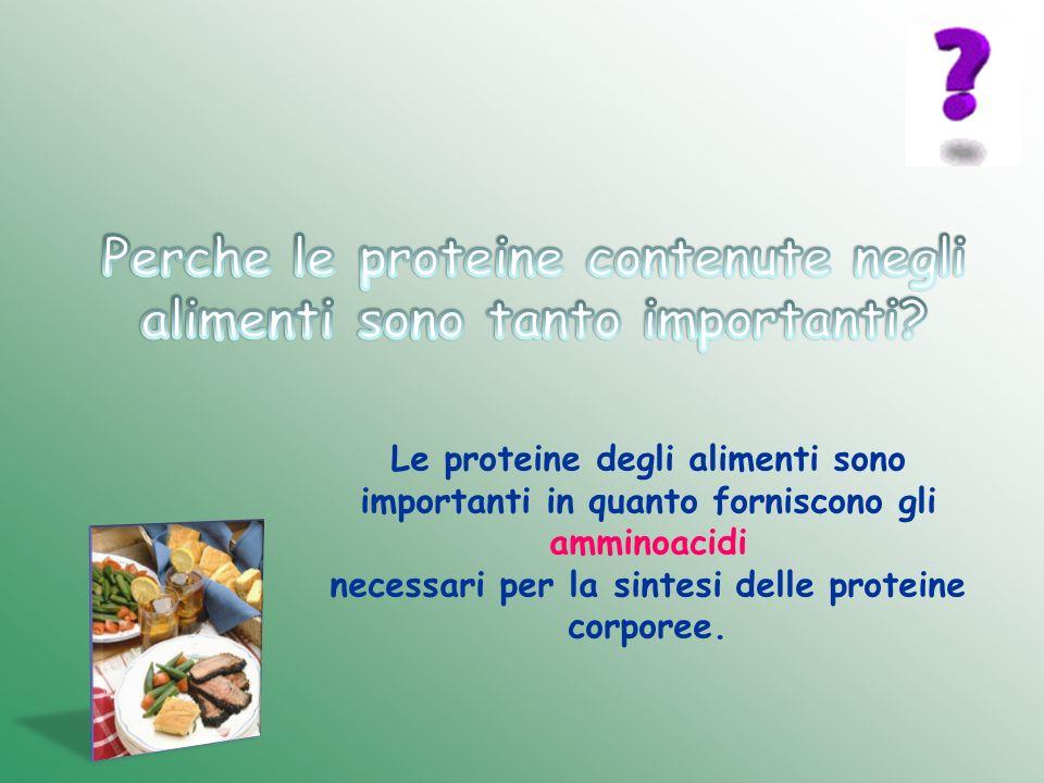Le proteine degli alimenti sono importanti in quanto forniscono gli amminoacidi necessari per la sintesi delle proteine corporee.