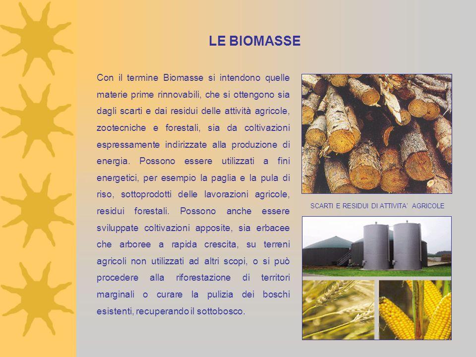 LE BIOMASSE Con il termine Biomasse si intendono quelle materie prime rinnovabili, che si ottengono sia dagli scarti e dai residui delle attività agricole, zootecniche e forestali, sia da coltivazioni espressamente indirizzate alla produzione di energia.