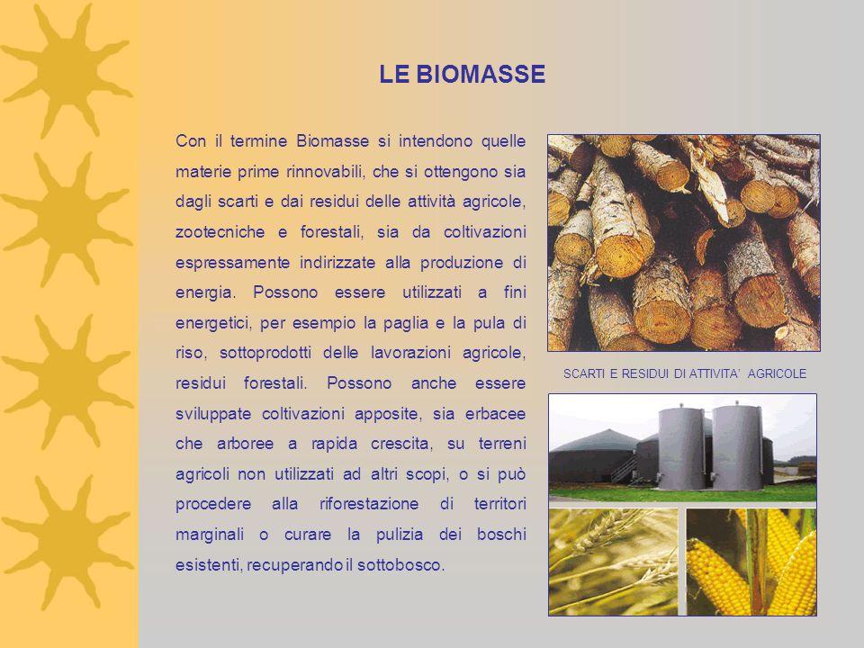LE BIOMASSE Con il termine Biomasse si intendono quelle materie prime rinnovabili, che si ottengono sia dagli scarti e dai residui delle attività agri