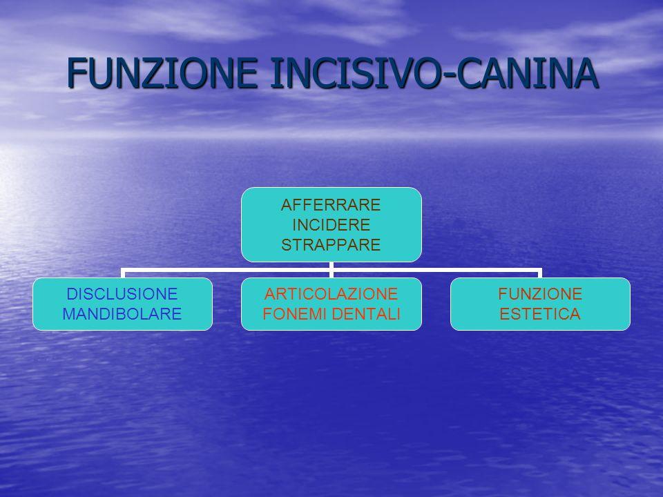 FUNZIONE INCISIVO-CANINA AFFERRARE INCIDERE STRAPPARE DISCLUSIONE MANDIBOLARE ARTICOLAZIONE FONEMI DENTALI FUNZIONE ESTETICA
