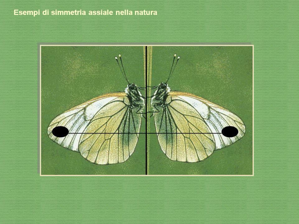Esempi di simmetria assiale nella natura
