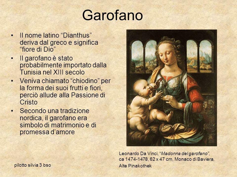 pilotto silvia 3 bso Garofano Il nome latino Dianthus deriva dal greco e significa fiore di Dio Il garofano è stato probabilmente importato dalla Tuni