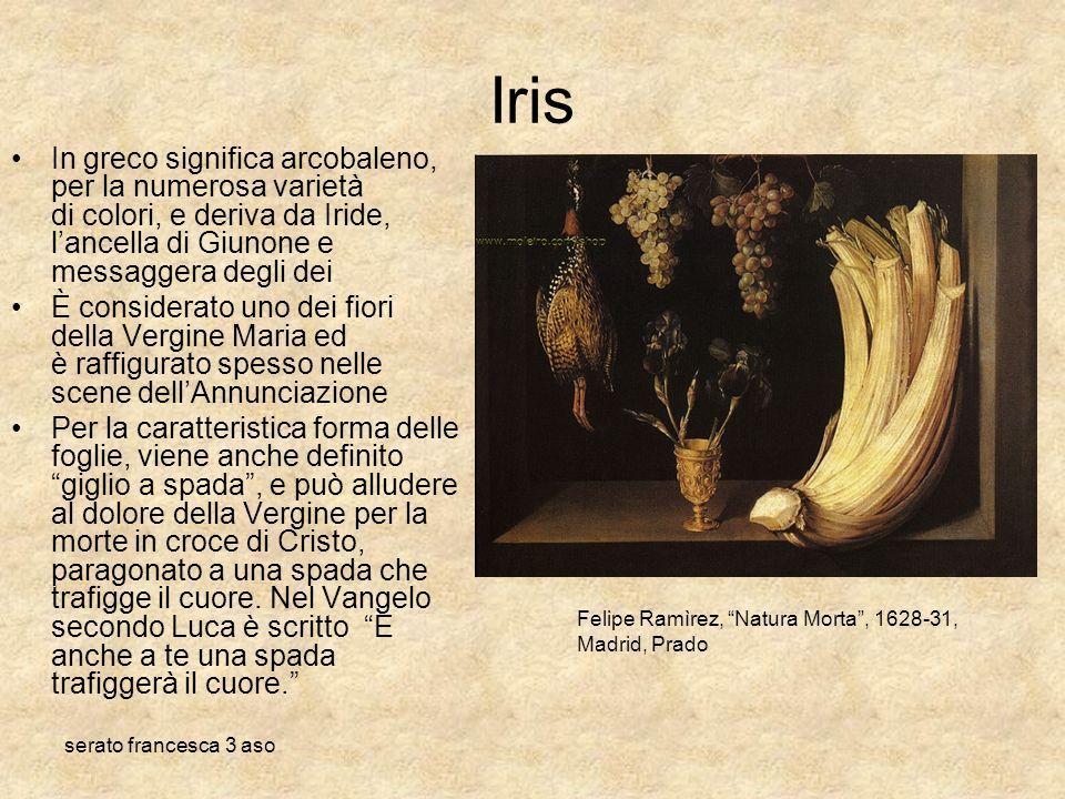 serato francesca 3 aso Iris In greco significa arcobaleno, per la numerosa varietà di colori, e deriva da Iride, lancella di Giunone e messaggera degl