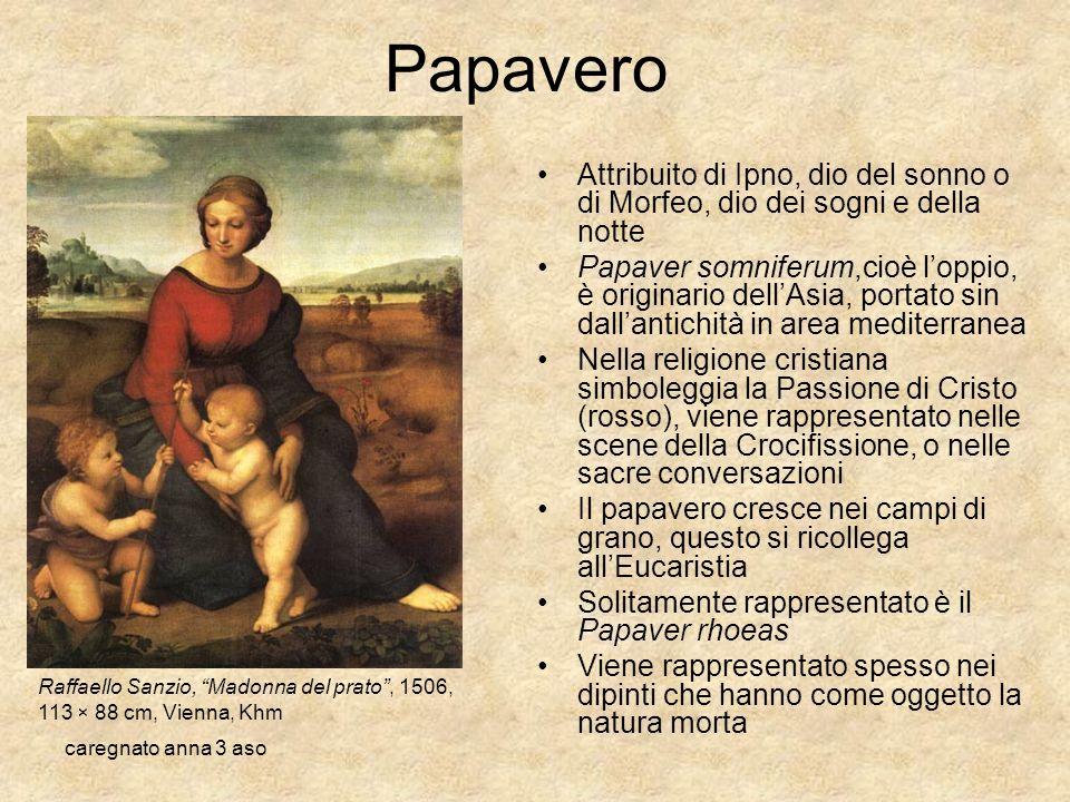 caregnato anna 3 aso Papavero Attribuito di Ipno, dio del sonno o di Morfeo, dio dei sogni e della notte Papaver somniferum,cioè loppio, è originario