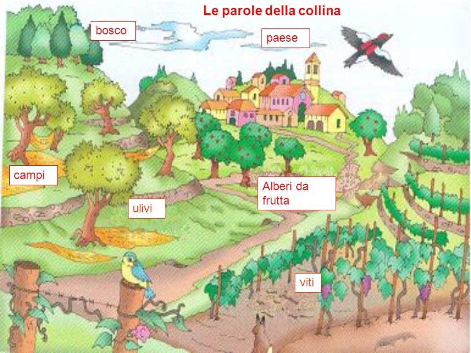 Le parole della collina ulivi viti Alberi da frutta paese bosco campi