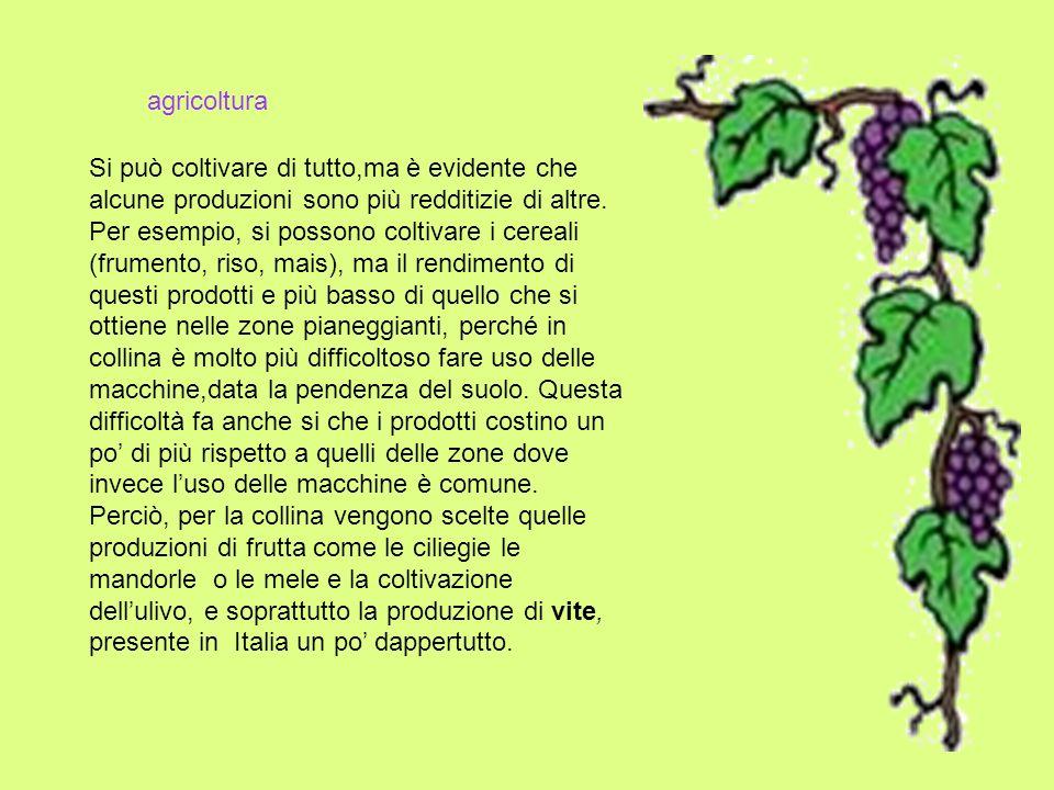 agricoltura Si può coltivare di tutto,ma è evidente che alcune produzioni sono più redditizie di altre.