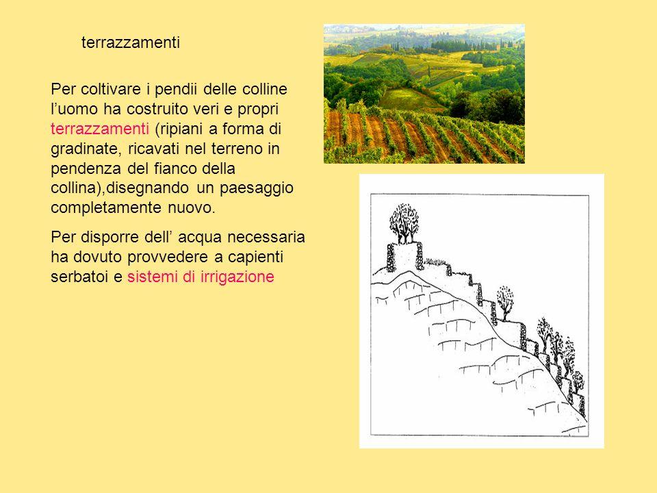 terrazzamenti Per coltivare i pendii delle colline luomo ha costruito veri e propri terrazzamenti (ripiani a forma di gradinate, ricavati nel terreno in pendenza del fianco della collina),disegnando un paesaggio completamente nuovo.