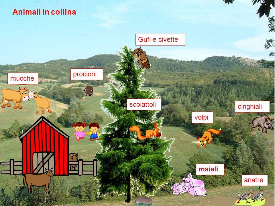 Animali in collina mucchemaialianatrescoiattoliGufi e civettevolpicinghialiprocioni