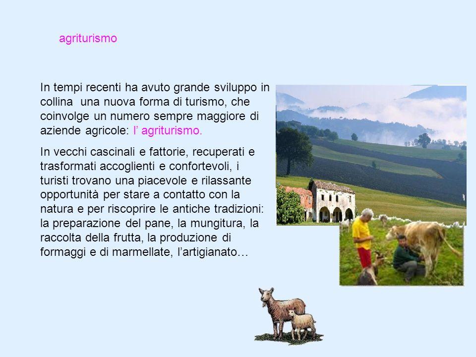 agriturismo In tempi recenti ha avuto grande sviluppo in collina una nuova forma di turismo, che coinvolge un numero sempre maggiore di aziende agricole: l agriturismo.