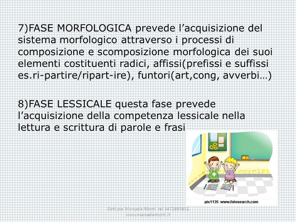 7)FASE MORFOLOGICA prevede lacquisizione del sistema morfologico attraverso i processi di composizione e scomposizione morfologica dei suoi elementi c