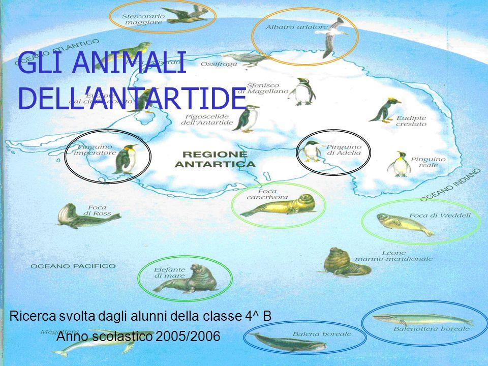 GLI ANIMALI DELLANTARTIDE Anno scolastico 2005/2006 Ricerca svolta dagli alunni della classe 4^ B