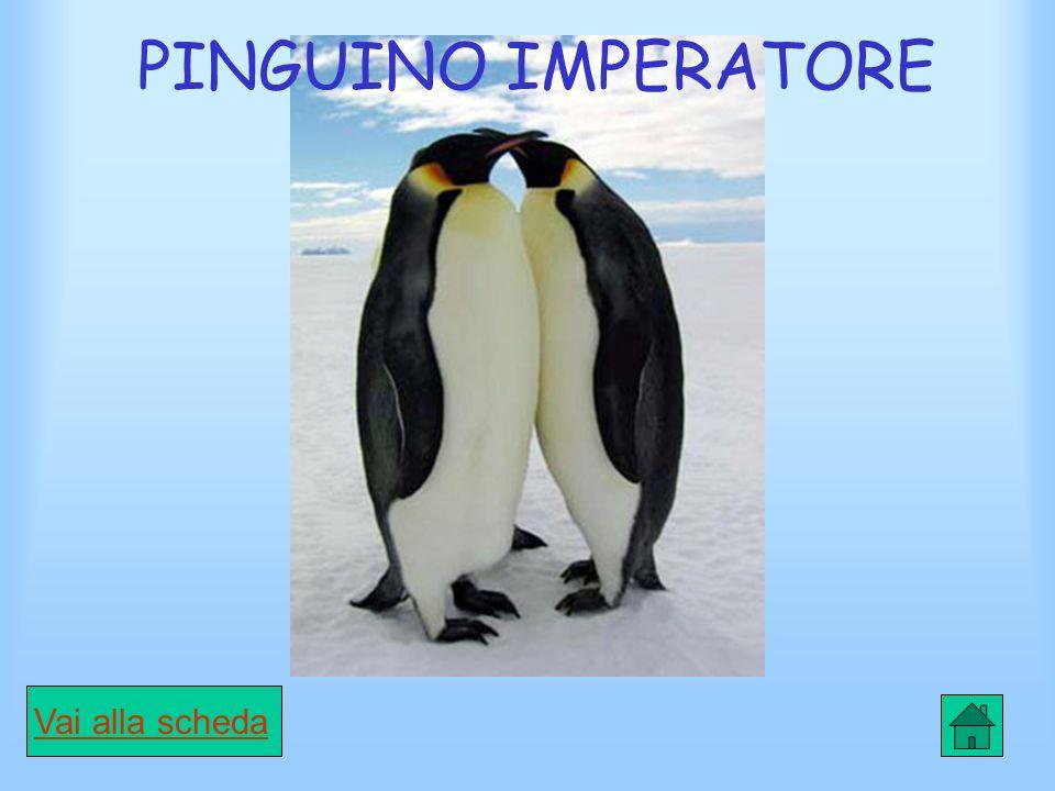 Scheda Pinguino di Adelia CARATTERISTICHE È un pinguino di medie dimensioni, è lungo circa 70 cm.