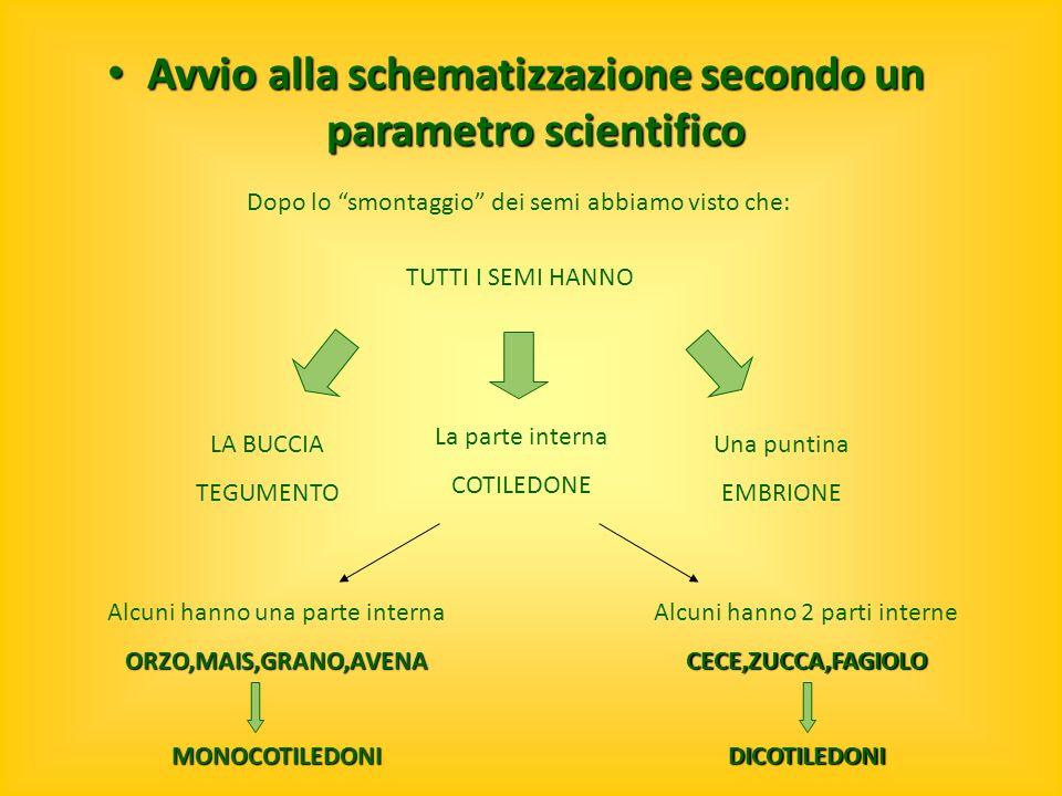 Avvio alla schematizzazione secondo un parametro scientifico Avvio alla schematizzazione secondo un parametro scientifico Dopo lo smontaggio dei semi
